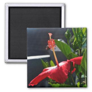 Side Shot of a Hibiscus Magnet Fridge Magnet
