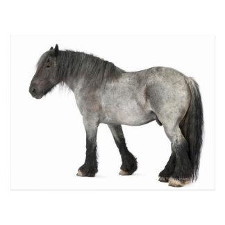 Side view of a Belgian horse, Belgian Heavy Postcard