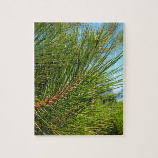 Side view of a pine branch with long needles close puzzles