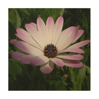 Side View of A Pink and White Osteospermum Wood Wall Decor