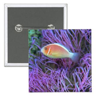 Side view of a pink anemone fish, Okinawa, Japan 2 Pinback Button