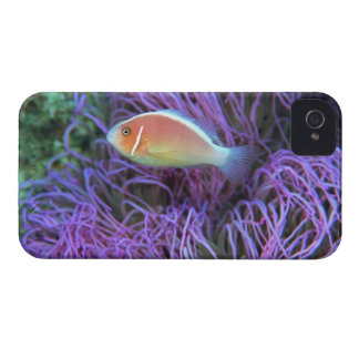 Side view of a pink anemone fish, Okinawa, Japan Case-Mate iPhone 4 Case