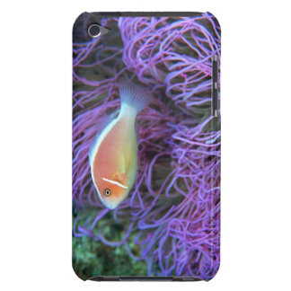 Side view of a pink anemone fish, Okinawa, Japan Case-Mate iPod Touch Case