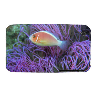 Side view of a pink anemone fish, Okinawa, Japan iPhone 3 Case