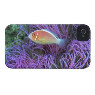 Side view of a pink anemone fish, Okinawa, Japan iPhone 4 Cover