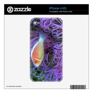 Side view of a pink anemone fish, Okinawa, Japan Skins For iPhone 4