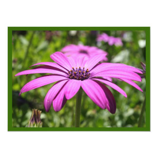 Side View Of A Purple Osteospermum With Garden Bac Card