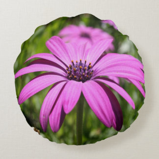 Side View Of A Purple Osteospermum With Garden Bac Round Pillow
