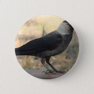 Side View Of A Wild Jackdaw Button
