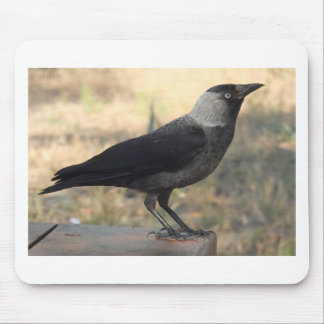 Side View Of A Wild Jackdaw Mouse Pad