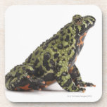 Side View of an Oriental Fire Bellied Toad Coasters