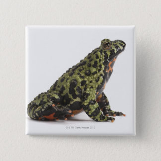 Side View of an Oriental Fire Bellied Toad Pinback Button