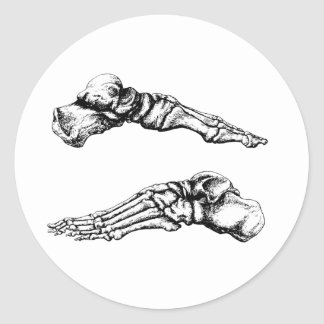Side view of bones of the feet classic round sticker