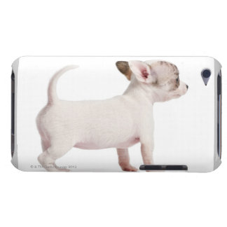 Side view of Chihuahua Puppy (10 weeks old) iPod Touch Case-Mate Case