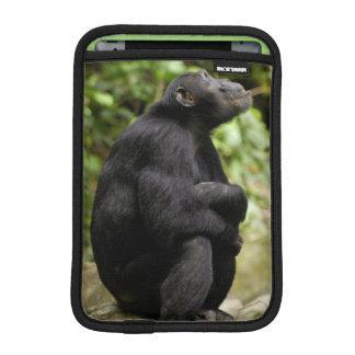 Side View Of Chimpanzee (Pan Troglodytes) iPad Mini Sleeve