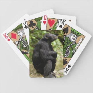 Side View Of Chimpanzee (Pan Troglodytes) Playing Cards