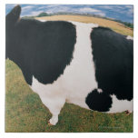 Side View of Friesian Cow Ceramic Tile