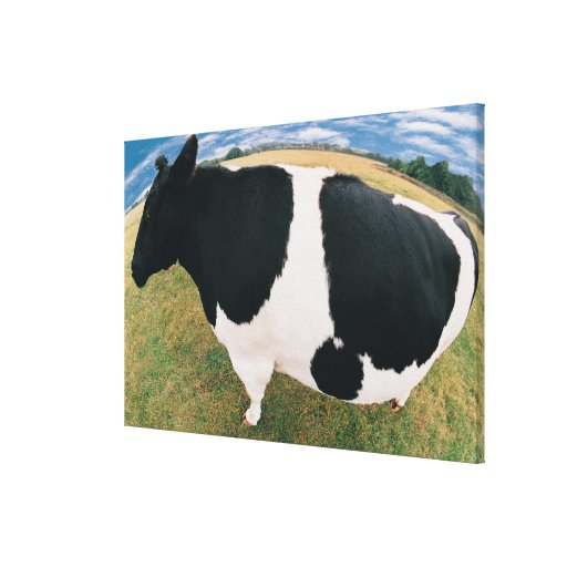 Side View of Friesian Cow Gallery Wrapped Canvas