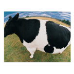 Side View of Friesian Cow Postcard