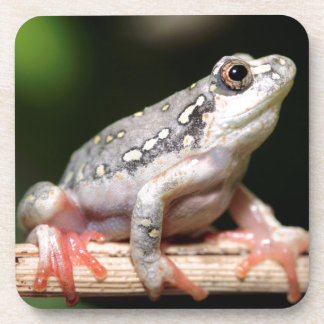 Side View Of Frog On Reed Beverage Coaster