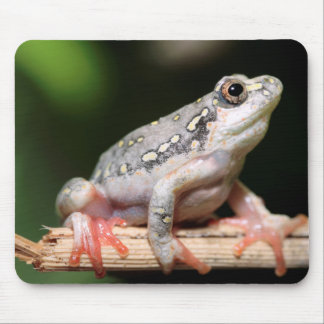 Side View Of Frog On Reed Mouse Pad