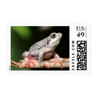 Side View Of Frog On Reed Postage