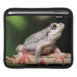 Side View Of Frog On Reed Sleeve For iPads