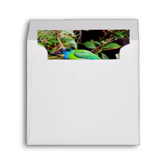 Side View Of Green Barbet Envelope
