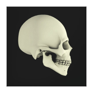 Side View Of Human Skull Canvas Print