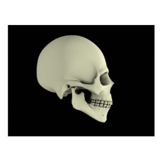 Side View Of Human Skull Postcard