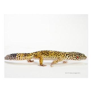 Side view of leopard gecko lizard postcard