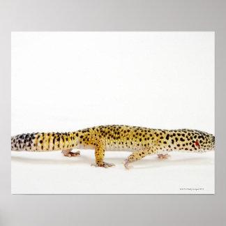 Side view of leopard gecko lizard poster
