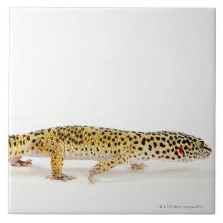 Side view of leopard gecko lizard tiles