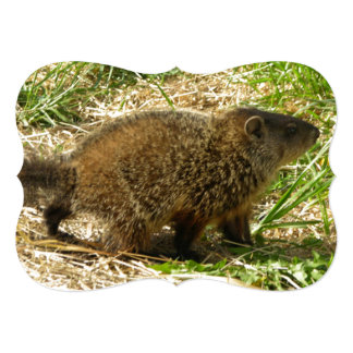 Side View of Marmot With Puffy Fur And Tail 5x7 Paper Invitation Card
