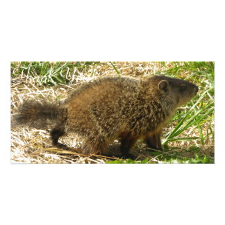 Side View of Marmot With Puffy Fur And Tail Custom Photo Card