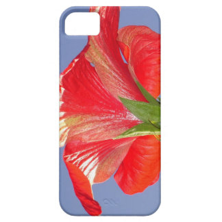 Side View of Scarlet Red Hibiscus In Bright Light iPhone 5 Covers