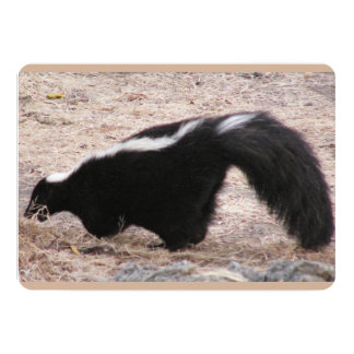 Side View of Skunk Near Rocks And Bedding Card