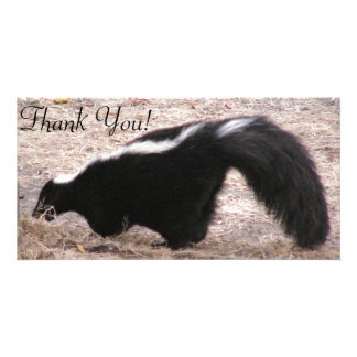 Side View of Skunk Near Rocks And Bedding Custom Photo Card