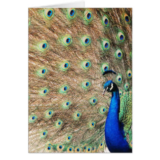 Side View Peacock Greeting Card