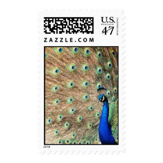 Side View Peacock Stamp