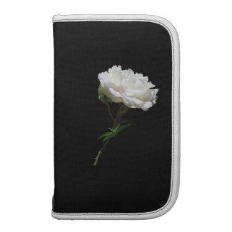 Side White Rose