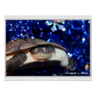 Sideneck turtle looking at viewer on blue tinsel posters