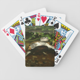 Sideneck turtle staring at viewer bicycle playing cards