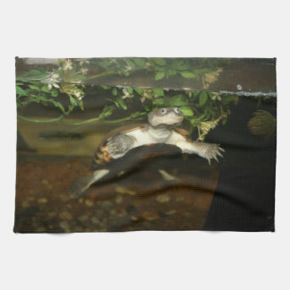 Sideneck turtle staring at viewer kitchen towel