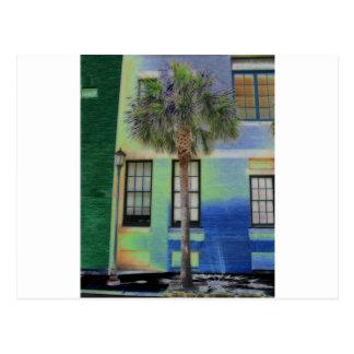 Sidewalk Palm Tree Postcard
