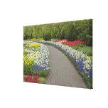 Sidewalk pathway through tulips and daffodils, 2 canvas print