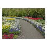 Sidewalk pathway through tulips and daffodils, 2 card