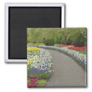 Sidewalk pathway through tulips and daffodils, 2 fridge magnets