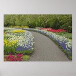 Sidewalk pathway through tulips and daffodils, 2 print