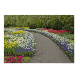 Sidewalk pathway through tulips and daffodils, 2 poster